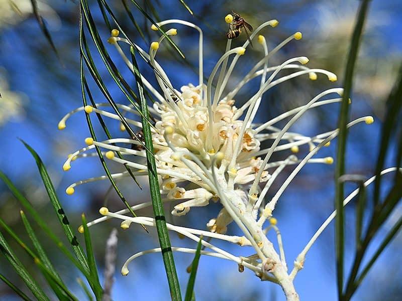 Herberton Flora and Fauna